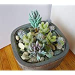 11-Pieces-Artificial-Mini-Plants-Gray-Flocking-Grass-Plants-Blue-Succulents-Decorative-Flowers-Artificial-Arrangement