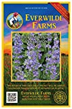 Everwilde Farms - 2000 Rocky Mountain Penstemon Native Wildflower Seeds - Gold Vault Jumbo Seed Packet