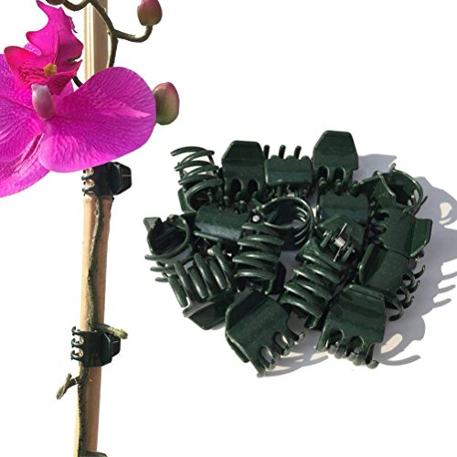Medium Orchid Clip - Vtete 50 PCS Large Size Orchid Clips and Garden Support Clips Green (Not with Flower and Plant Spike)