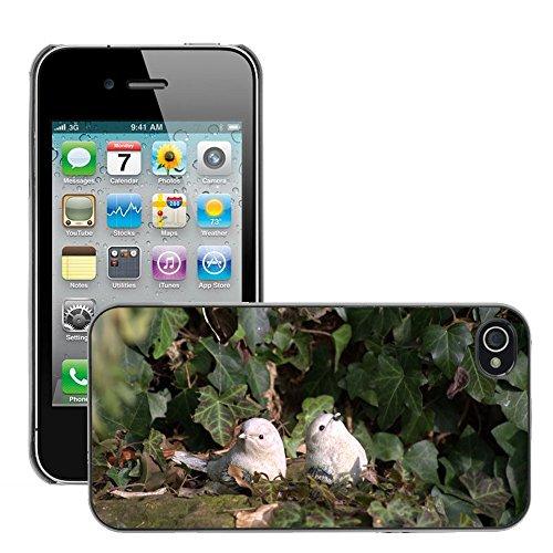 Bild Hart Handy Schwarz Schutz Case Cover Schale Etui // M00135307 Garten Stillleben Bild Birds // Apple iPhone 4 4S 4G