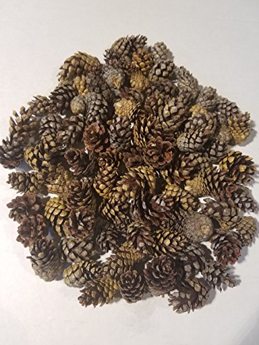 (Large Bag of Weathered Small Pinecones - Perfect for Weddings or Bowl Fillers - Unscented for Decoration Or Homemade Potpourri - Made in)