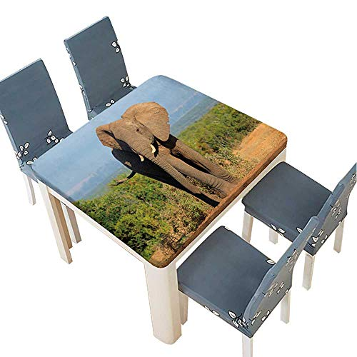 PINAFORE Spillproof Fabric Tablecloth Large African Elephant Bull (Loxodonta africana),Addo Elephant National Park,South Africa Kitchen Decoration Washable 61 x 61 INCH (Elastic -