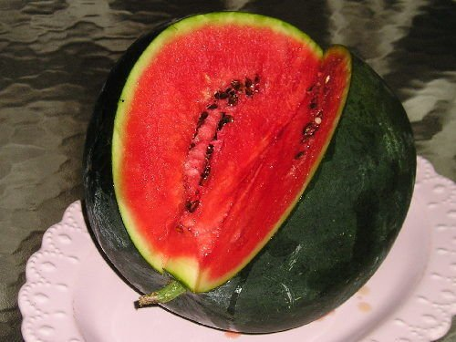 25+ Premium Bush Type Sugar Baby Watermelon Seeds-W 185