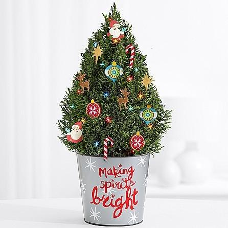 Christmas Celebrated Tree - eshopclub Same Day Christmas Flower Delivery - Online Christmas Flowers - Christmas Flowers Plants - Send Christmas Plants by eshopclub