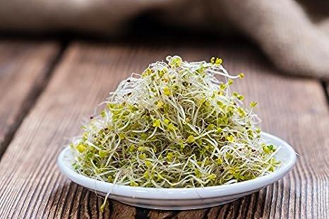 BIO - Semillas de brócoli - semillas orgánicas certificadas - 3000 semillas