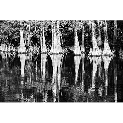 B&W Cypress Tree Photo, Cypress Reflections by TravLin Photography, Multiple Sizes (5x7 to 24x36)