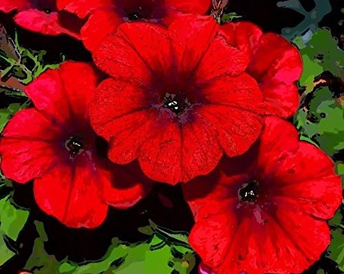 40 Seeds: red Wave Velour Petunia Trailing Cascading Hanging pots planters Bulk Seeds ()