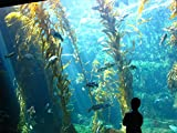 Huge, Giant Kelp Tank at Birch Aquarium, San Diego, CA La Jolla offers