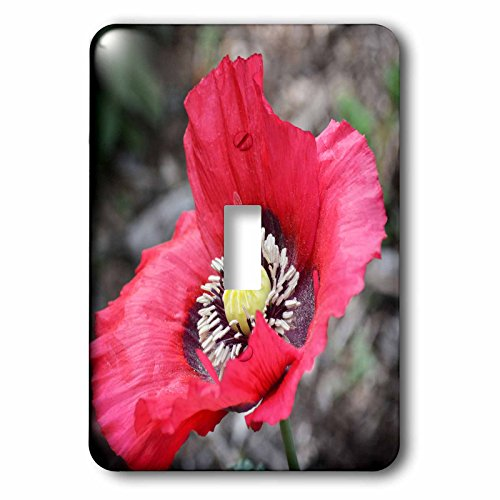 Poppy Nectar - 3dRose WhiteOaks Photography and Artwork - Poppy Flowers - Home is where the nectar is a photo of a bee inside a poppy flower - Light Switch Covers - single toggle switch (lsp_252494_1)