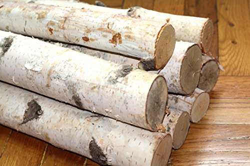 Northern white birch logs set of 8 logs
