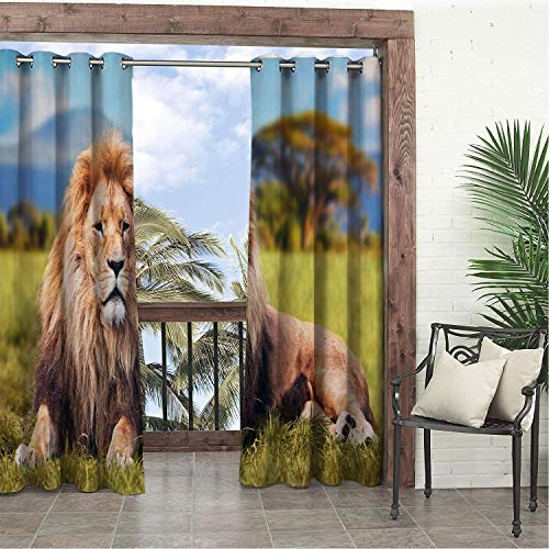 (Garden Waterproof Curtains Lion Large Jungle Beast Lying on Savannah Grass African Trees Hills Background Pale Brown Green Blue doorways Grommets Decor Curtains 72 by 84 inch)