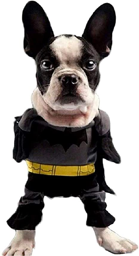 EVRYLON Disfraz para Animales murciélago Perro m Batman: Amazon.es ...