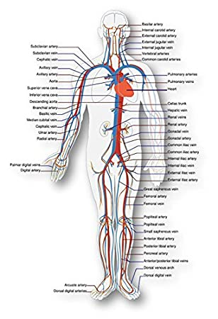 diagram of veins in wrist babies wiring diagrams clicks Hand Veins in Wrist and All Names diagram of veins in wrist babies wiring diagrams one diagram of veins in wrist babies