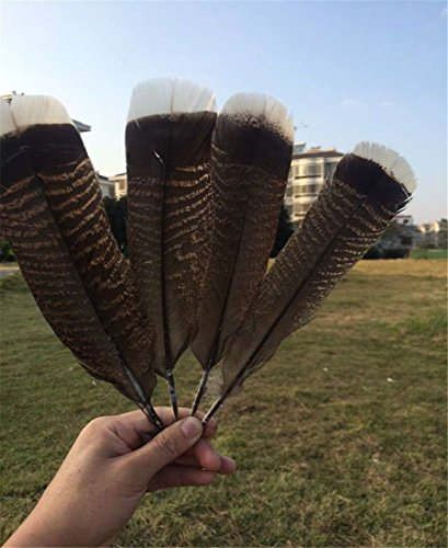 (fashion 20pcs precious wild turkey tail feathers 10-12inches / 25-30cm)
