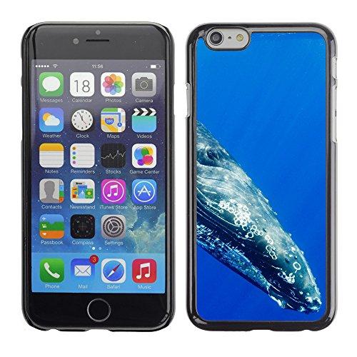 "Premio Sottile Slim Cassa Custodia Case Cover Shell // V00003457 baleine à bosse // Apple iPhone 6 6S 6G PLUS 5.5"""