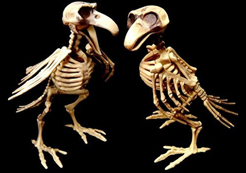 Bird Skeleton 7.5