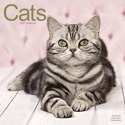 Cat Calendar - Cute Animals Wall Calendar - Calendars 2016 - 2017 Wall Calendars - Cats 16 Month Wall Calendar by Avonside