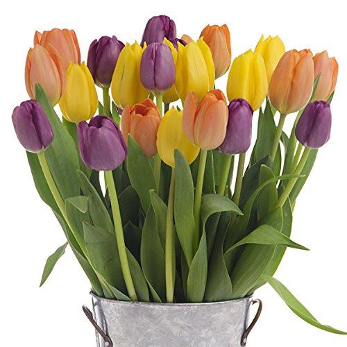2-Dozen-Multi-Colored-Tulips-With-Vase-American-Grown