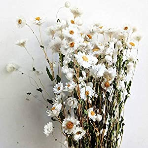 VHD Dried Natural Flowers Decorative Daisy Bouquet 30g, Preserved Flower Mini Daisy Wedding Floral Arrangements Home Party Decorations (White) 111