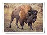 American Bison - Wildlife Photograph Animal Picture Home Decor Wall Nature Print - Variety of Sizes Available