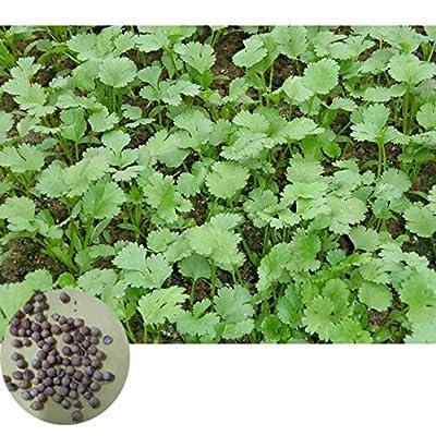 500pcs/set Cilantro Seed Kit Coriander Chinese Parsley Seeds Garden Decor