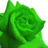 20pcs Green Rose Seeds Flower Seeds