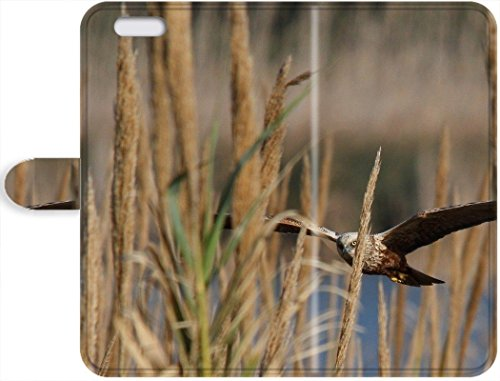 Personality pictures iPhone 6/iPhone 6s, Circus Aeruginosus Western Marsh Harrier Leather Case For iPhone 6/iPhone 6s For Design By [Zhao (Harrier Leather)