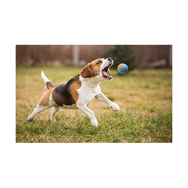 Snug Rubber Dog Balls - Tennis Ball Size - Tough, Durable, Virtually Indestructible - Extra Bouncy (3 Pack) 4