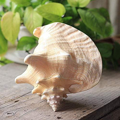 Cáscara natural concha casero decoración acuario paisajismo carcasa artesanía 2
