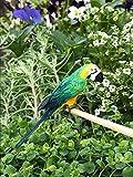 Fairy Garden Figurine Miniature Dollhouse FAIRY GARDEN Accessories ~ Green Macaw Parrot Bird ~Trimiurti online-store