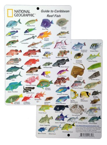 - National Geographic - Guide to Caribbean Reef fish - Fish ID Card (6 in by 9 in)