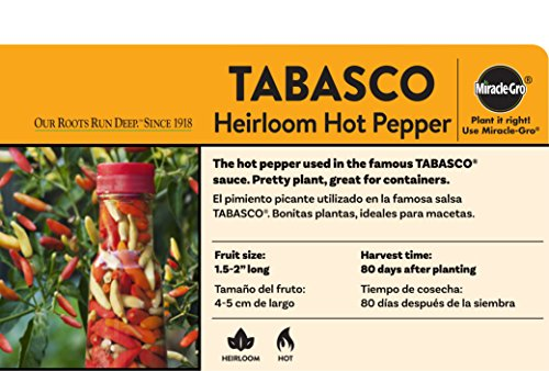 Bonnie Plants Tabasco Pepper - 4 Pack Live Plants | 1.5 - 2 Inch Fruits | 24 - 36 Inch Tall Plants | Great For Pickling & Preserving by Bonnie Plants (Image #2)