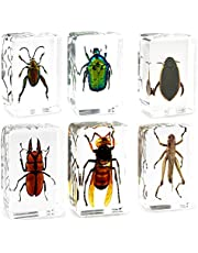 QTMY 6 Pack Insect in Resin Specimen Collection Paperweights for Office Desk,Christmas for Men Women Biology Science Teacher Education (2)