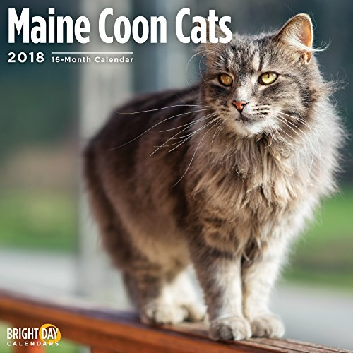 Maine Coon Cats 2018 16 Month Wall Calendar 12 x 12 inches