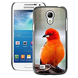 A-type Arte & diseño plástico duro Fundas Cover Cubre Hard Case Cover para Samsung Galaxy S4 Mini i9190 (NOT S4) (Bird Feathers Orange Red Furry Beak)