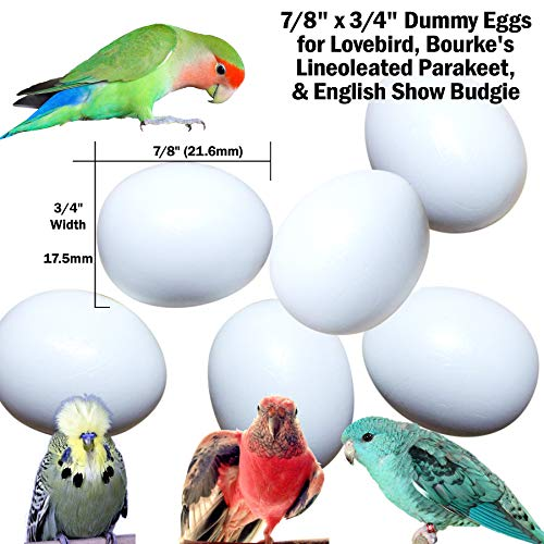 DummyEggs Stop Laying! Fake Bird Eggs: Lovebirds, Lineoleated Parakeet, English Budgie, Bourke's. White Solid Plastic Realistic - 7/8