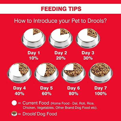 buy drools optimum performance adult dog food 20kg online at low prices in india amazon in