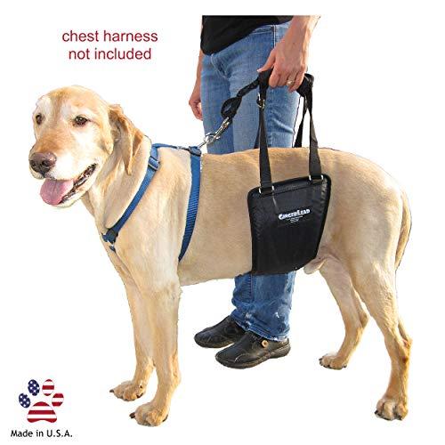 GingerLead Dog Support Rehabilitation