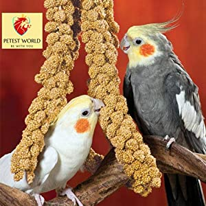 Leo Steel Canary Seeds for Bird Food (250 g)