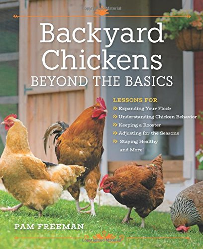backyard-chickens-beyond-the-basics-lessons-for-expanding-your-flock-understanding-chicken-behavior-