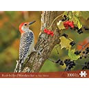 Red-bellied Woodpecker (Wildlife Photography Puzzles)