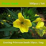 Evening Primrose for Planting 500Pcs, Biennial Oenothera Biennis Flower, Herbaceous Flowering Plants Sundrops
