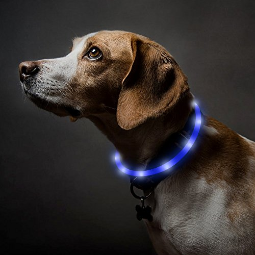 BSEEN LED Dog Collar, USB Rechargeable Light Up Pet Safety Collar with 3 Glowing Modes, Flexible Silicone Dog Collar for Night Dog Walking (Blue)