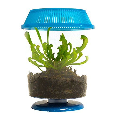 lant in Terrarium - Carnivorous Plant P. Purpurea (Pitcher Plant Terrarium)