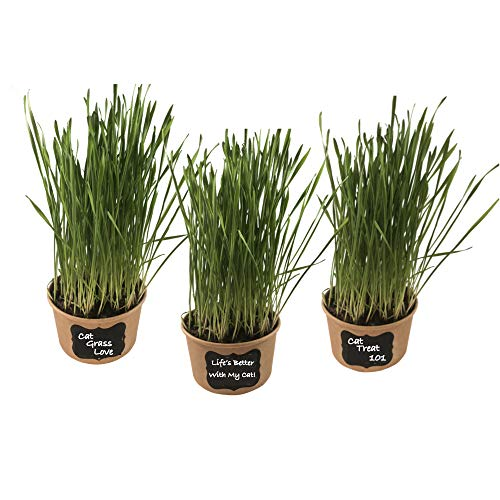 Easy Cat Grass Kit (3 Pack) - Just Add Water. Includes Certified Organic Non GMO Wheatgrass Seed, Fiber Soil, Cups, Chalkboard Labels & Chalk. Your Pets Will Love This.