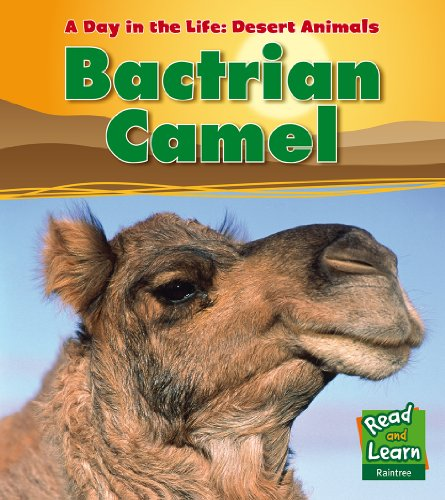 Bactrian Camel (Read & Learn: A Day in the Life: Desert Animals)