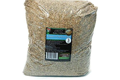Kentucky K31 Tall Fescue Grass Seed by Eretz - Willamette Valley, Oregon Grown (3lbs)
