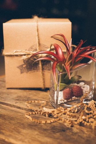 Hinterland Trading Air Plant Terrarium Heart Vase Perfect Valentine's Day Gift! Velutina Tillandsia with Strawberry Seashells Gift Boxed