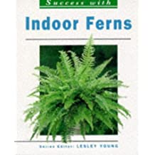 Success With Indoor Ferns