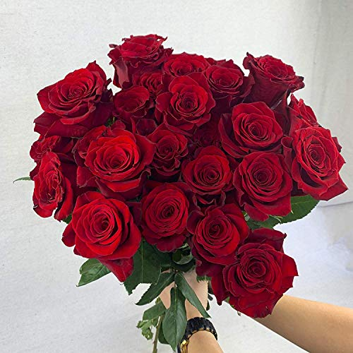 Green Choice Flowers - 50 Stems of Premium Red Fresh Roses with 20 inch Long Stem Farm Fresh Flowers Beautiful Red Rose Flower Cut Per Order Direct from Farm Fast Free Delivery Long Lasting